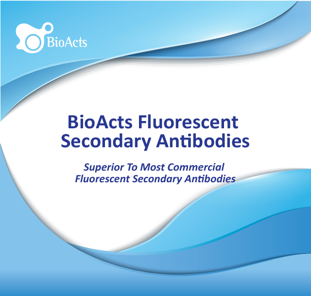 Fluorescent Secondary Antibodies