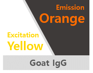Rabbit anti-goat IgG, Flamma® 594